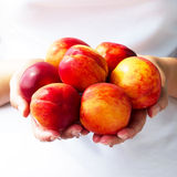 The harvest of peaches Royalty Free Stock Photography