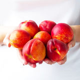 The harvest of peaches Stock Photography