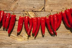 Drying peppers in the sun. Royalty Free Stock Photography