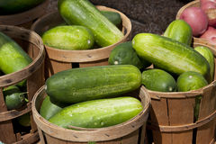 Harvest of pickles at farmers market Stock Image