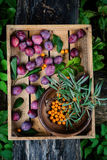 Harvest of plums and berries Stock Photography