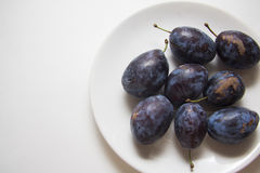 Harvest of plums Royalty Free Stock Photo