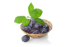 Harvest of plums in a wicker basket Royalty Free Stock Images
