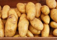 Harvest potato Royalty Free Stock Image