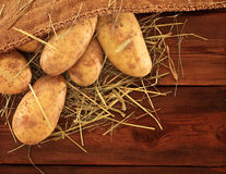 Harvest potatoes in burlap sack Royalty Free Stock Image