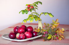 Harvest produce Royalty Free Stock Image