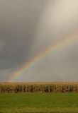 Harvest Promise. Rainbow over a field with ripe corn weed Stock Photos