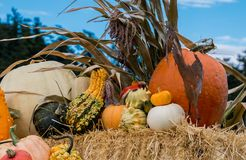 Harvest pumpkin display. Pumpkins and fancy squash on display at the farm Royalty Free Stock Images