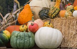 Harvest pumpkin display. Pumpkins and fancy squash on display at the farm Stock Photography