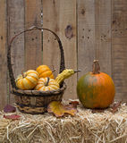Harvest Pumpkin and Gourds Royalty Free Stock Photos
