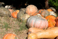 Harvest pumpkin on the ground Royalty Free Stock Photography