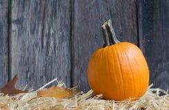 Harvest Pumpkin Royalty Free Stock Photography