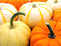 Harvest pumpkins Royalty Free Stock Photography