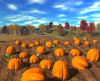 Harvest_pumpkins Fotografia de Stock Royalty Free