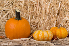Harvest Pumpkins Royalty Free Stock Photos