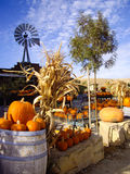 Harvest Pumpkins Stock Images