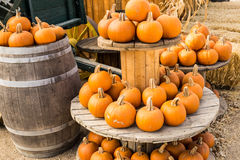 Harvest Pumpkins on Display Royalty Free Stock Photography