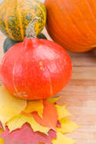 Harvest of pumpkins Stock Photography