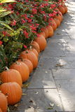 A Harvest of Pumpkins and Flowers. Pumpkins and Flowers on a brick road Stock Images