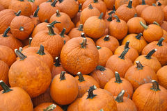 The Harvest of Pumpkins Royalty Free Stock Images