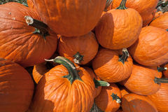 The Harvest of Pumpkins Stock Photos