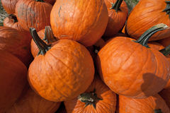 The Harvest of Pumpkins Royalty Free Stock Photography