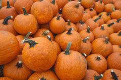 The Harvest of Pumpkins Royalty Free Stock Photos