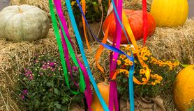 Harvest of pumpkins, squash, gourds and chrysanthemums arranged Stock Image