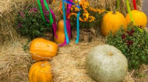 Harvest of pumpkins, squash, gourds and chrysanthemums arranged Royalty Free Stock Images