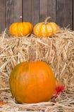 Harvest Pumpkins Stock Photos