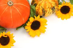 Harvest pumpkins with sunflower Royalty Free Stock Image