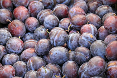 Harvest of Purple Plums. Fresh purple plums available to eat Stock Image