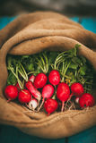 Harvest of radishes Stock Photo