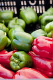 Harvest of red and green bell peppers Stock Photography
