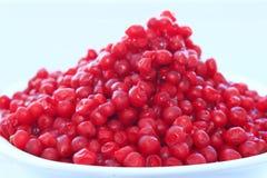 Harvest of red schizandra Royalty Free Stock Photo
