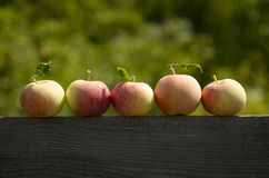 Harvest. Stock Photography