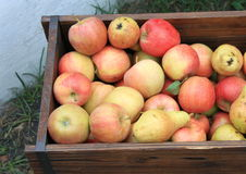 Harvest of ripe apples and pears Stock Photo