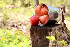 Harvest of ripe juicy red apples in a bucket on a stump on a nat stock image