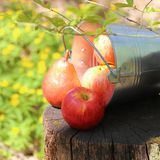 Harvest of ripe juicy red apples and pears in a bucket on a stump in the garden on a natural sunny yellow-green background. stock photos