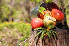 Harvest of ripe juicy red apples and pears in a bucket on a stum stock images
