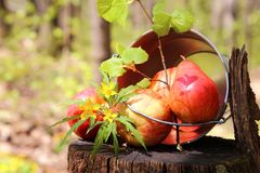 Harvest of ripe juicy red apples and pears in a bucket on a stump in the garden on a natural sunny yellow-green background. stock image