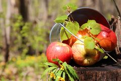 Harvest of ripe juicy red apples and pears in a bucket on a stum royalty free stock images