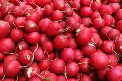 Harvest of ripe radishes. A lot of red radish, harvesting Royalty Free Stock Photo