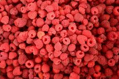 Harvest of ripe raspberries collected for canning royalty free stock images