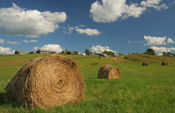 Harvest in Rissia. Harvest landscape in Russia. Summer Stock Images