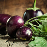 Harvest of Round Eggplants Royalty Free Stock Images