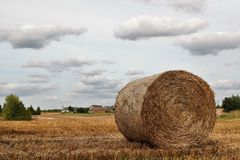 Harvest. Rural landscape after the harvest. Bialachowo, Poland royalty free stock images