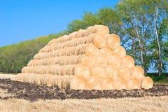 Harvest of rye Stock Photos
