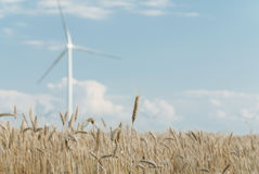Harvest of rye and windmills Stock Photos