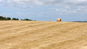 Harvest in Sardinia. Golden Harvest time in Sardinia Royalty Free Stock Images
